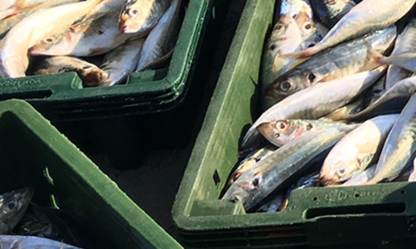 Fish in boxes