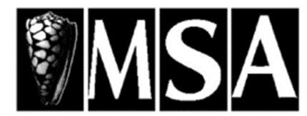 Logo for Malacological Society of Australasia (MSA)